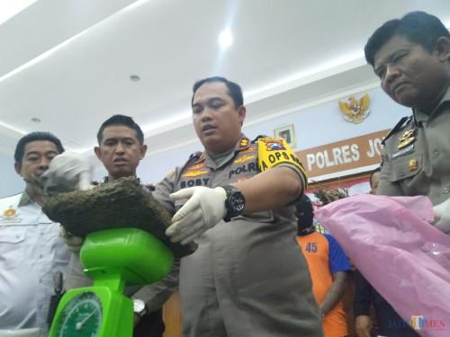 (tengah) Kapolres Jombang AKBP Boby Pa'ludin Tambunan menimbang barang bukti ganja kering seberat setengah kilogram yang disita dari pelaku. (Foto : Adi Rosul / JombangTIMES)