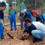 Ratusan Siswa SD Bersama Pokmas Wisata  Bersih-bersih Pantai dan Tanam Pohon Cemara