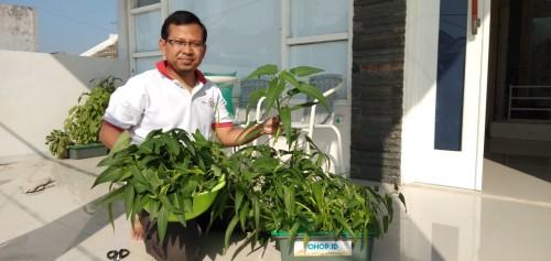 Riza Rahman HakimSPi MSc selaku Kepala Fish Edu Park memperlihatkan hasil tanaman melalui teknologi Bionic. (Foto: Humas)