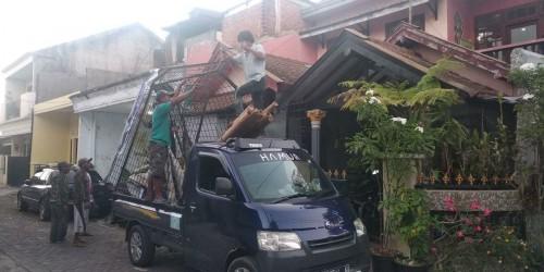 Suasana saat pembongkaran kanopi rumah Clara Gopa yang viral di medsos (ist)