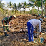 Semangat Babinsa Koramil 0808/18 Panggungrejo Dampingi Kelompok Tani