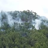 Kebakaran Hutan Berlanjut, 3 Hektar Lahan di Petak 10B dan Hutan Produksi Kota Batu Terbakar