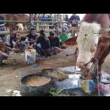 Ada Pembeda, Ratusan Peserta Ramaikan Kontes Ternak di Jember