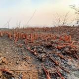 Selama Oktober di Kota Batu Terjadi 30 Bencana, Terbanyak Kebakaran Hutan Terparah Angin Kencang