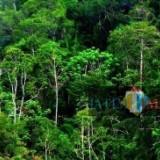 KKPH Banyuwangi Selatan : Apapun Bentuknya, Pungli Bisa Dipidanakan