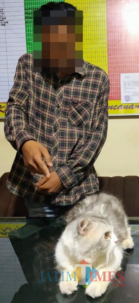 Pelaku Pencurian Kucing Anggora dan Persia, Diringkus Polisi saat COD