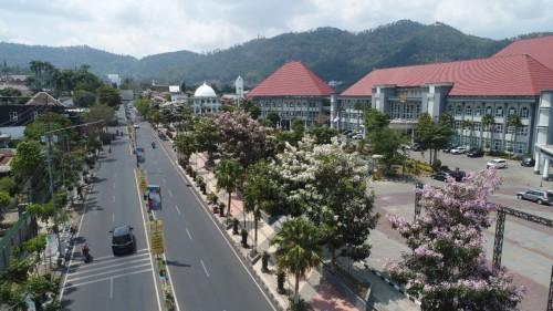 Keindahan pohon tabebuya di Taman Balai Kota Among Tani, jalan Panglima Sudirman, Desa Pesanggrahan, Kecamatan Batu.