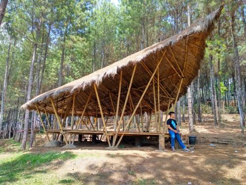 Hutan Pinus Gogoniti di Desa Kemirigede, Kabupaten Blitar.(Foto : Malik Naharul/BlitarTIMES)