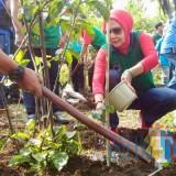 Wali Kota Dewanti Bakal Wajibkan Setiap Warga Tanam Pohon, Sanksinya Tak Bisa Urus Dokumen Kependudukan