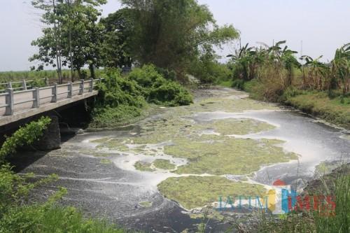 Ini Upaya KLHK Ungkap Pencemaran Limbah di Sungai Avur Budug Kesambi Jombang