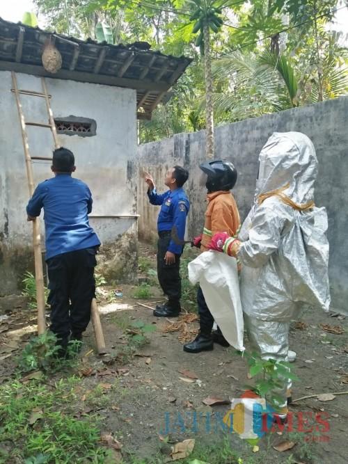 Ancam Keamanan Warga, Damkar Kabupaten Blitar Musnahkan Sarang Tawon Vespa