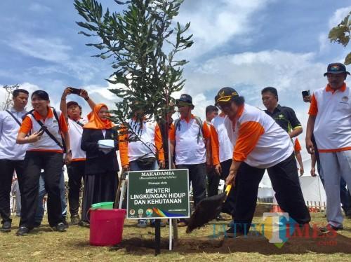 Menteri Lingkungan Hidup dan Kehutanan Siti Nurbaya Bakar saat menanam pohon makadamia di area Jlibar, Kecamatan Batu, Kamis (5/12/2019). (Foto: Irsya Richa/MalangTIMES)