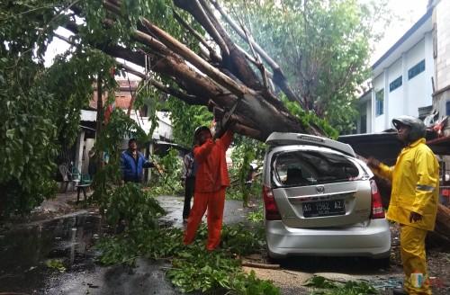 Petugas memotong pohon yang menimpa sebuah mobil. (eko Arif s /JatimTimes)