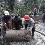 Hujan Deras dan Angin Kencang di Gandusari Blitar, Belasan Rumah Warga Rusak Tertimpa Pohon