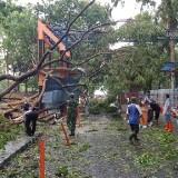 Detik-detik Kepanikan Petugas Retribusi Bendungan Lahor saat Tertimpa Pohon Tumbang