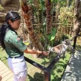Batu Secret Zoo Punya Wahana Baru Lemur Kingdom, Serasa di Madagaskar