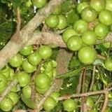 Perkilo Capai Harga Setengah Juta Rupiah, Ini Deretan Kacang Termahal di Dunia