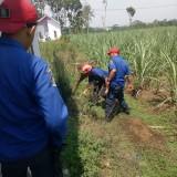 Dalam Sehari Tiga Ekor Ular Kobra Ditemukan Dalam Rumah Warga Kabupaten Malang