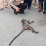 Evakuasi Monyet Mati Usai Tersetrum dan Terjatuh dari Tiang Listrik, Polisi Ini Jadi Buah Bibir Pembicaraan Netizen