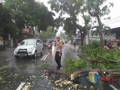 Hujan Angin Tiga Pohon Roboh di Jalan, Polisi Buka Tutup Arus Lalu Lintas