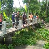 Ratusan Ton Enceng Gondok Berhasil Diangkat dari Aliran Sungai Bondoyudo