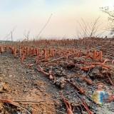 Tiga Desa yang Dilanda Badai Oktober 2019 Digelontor Bantuan Pertanian