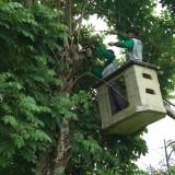 Dianggap Berbahaya, DLH Tulungagung Robohkan Puluhan Pohon di Jalan Protokol