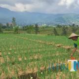 Tahun 2020 BPN Kota Batu Targetkan 8.500 Sertifikat Bidang Tanah Selesai Untuk Dua Desa