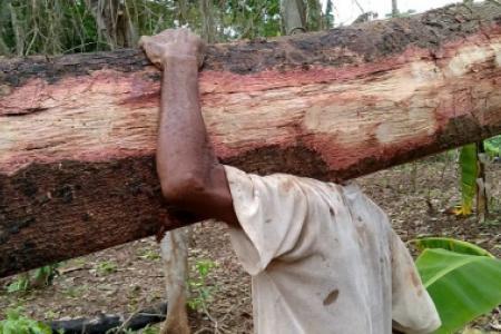 Kisah Klasik Pembalakan Liar Hutan di Malang Selatan, Kerusakan Tembus 70 Persen