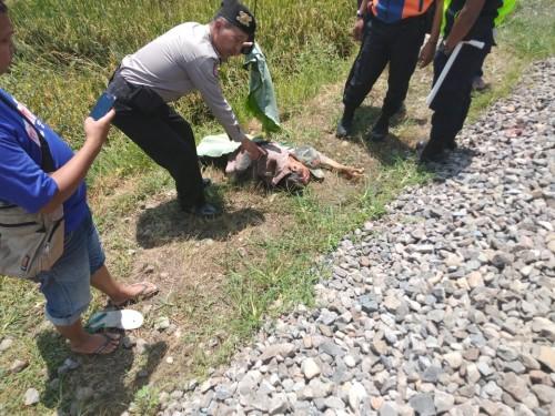 Kondisi korban yang sudah tergeletak tak bernyawa usai ditabrak kereta (Ist)