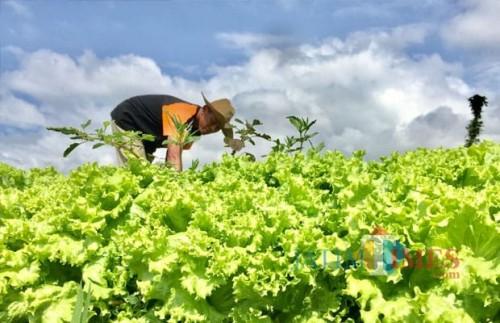 Sukseskan 5 Program,  2020 Pertanian Kota Batu Digelontor Rp 20 Miliar