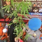 Didominasi Ungkap Kasus Ganja, Mulai dari Biji Hingga Ganja Siap Edar Tersebar di Kabupaten Malang