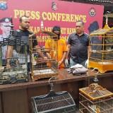 Akhirnya, Spesialis Maling Burung Berkelas di Singosari, Diringkus Polisi