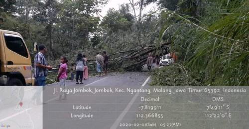 Pohon tumbang menutup Jalan Raya Jombok, Kecamatan Ngantang, Kabupaten Malang, Sabtu (1/2/2020). (Foto: istimewa)