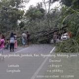 Pohon Tumbang ke Jalan, Jalur Malang-Kediri Macet 1 Kilometer
