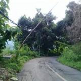 Tiang Listrik Hampir Ambruk di Sumbermanjing Wetan Ancam Keselamatan Warga