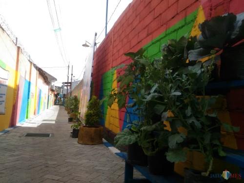 Kampung Sirih Kelurahan Ditrotrunan Lumajang. (Foto: Moch. R. Abdul Fatah / Jatim TIMES)