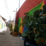 Wabup Lumajang Resmikan Kampung Sirih Kelurahan Ditotrunan