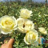 Taman Bunga Seluas 8 Hektar Bakal Hadir di Desa Bumiaji