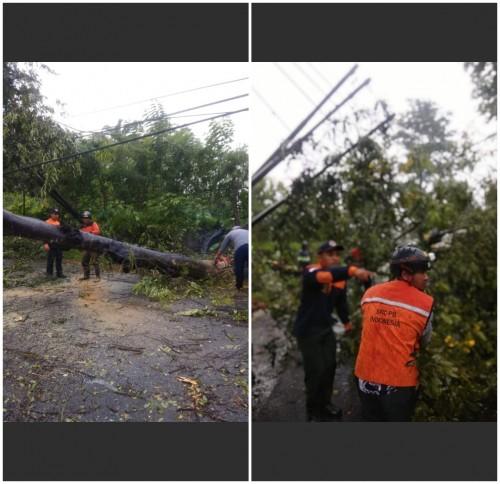 Petugas mengevakuasi pohon tumbang yang disebabkan hujan lebat dan angin kencang.