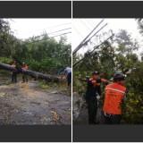 Badai Landa Turen, Sejumlah Rumah Rusak dan Pohon Besar Tumbang