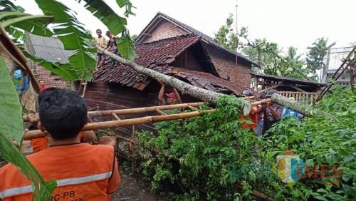 Petugas beserta warga saat mengevakuasi rumah warga yang roboh akibat tertimpa pohon tumbang yang diterjang angin kencang (Foto : PMI Kabupaten Malang for MalangTIMES)