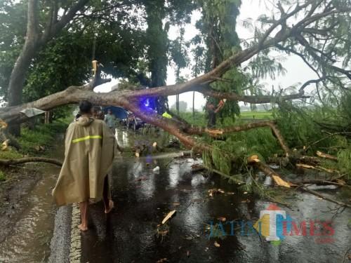Evakuasi pohon tumbang yang disebabkan hujan deras disertai angin kencang, yang menutup akses lalu lintas Malang-Blitar di Desa Ngebruk, Kecamatan Sumberpucung, Kabupaten Malang. (Foto : Humas Polres Malang for MalangTimes)