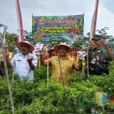 Pimpin Panen Raya Cabai di Desa Kaligambir, Ini Pesan Bupati Blitar