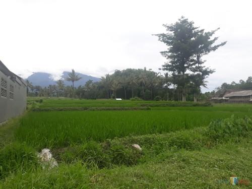 Lahan Pertanian di Desa Karangnongko, Kecamatan Poncokusumo, Kabupaten Malang (Foto: Tubagus Achmad / MalangTimes)