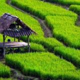 Tiap Tahun, Lima Persen Lahan Pertanian di Kedungkandang Beralih Fungsi, Berikut Penjelasan DPUPR Kota Malang