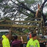 Blitar Kembali Dilanda Hujan Disertai Angin Kencang, Pohon-Pohon Besar Bertumbangan