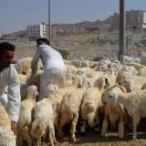 Kerajaan Arab Saudi Imbau Warga Indonesia yang Umrah Tak Kunjungi Pasar Hewan