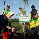 Tambah Daerah Tangkapan Air, Pemkab Kediri Tanam 6.500 Pohon