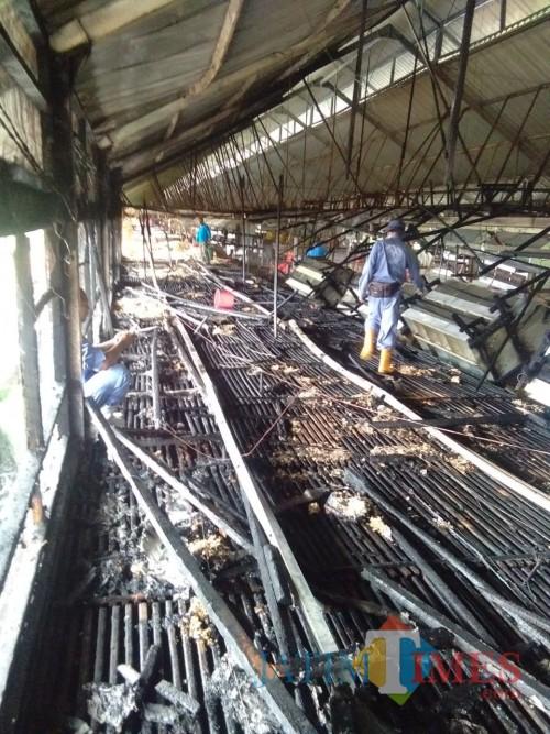 Kondisi kandang ayam milik PT Japfa Comfeed sesaat setelah insiden kebakaran terjadi. (Foto : PPBK Kabupaten Malang for MalangTIMES)